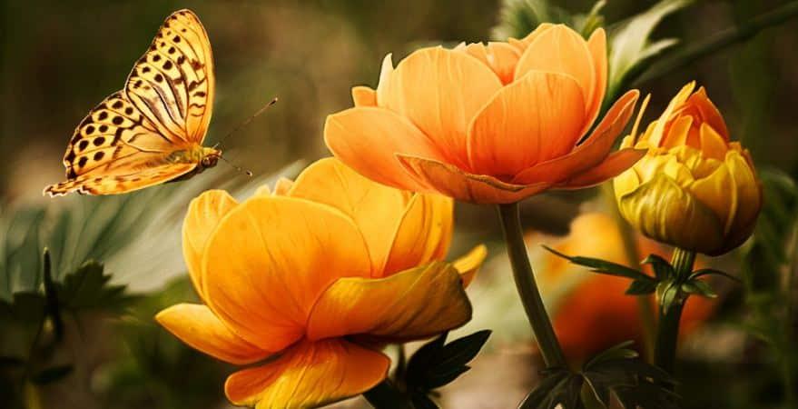 8 Contoh Puisi Pendek Tentang Bunga Ruang Seni